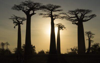 Visiter Madagascar : les plus beaux circuits